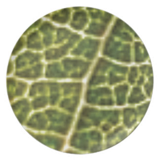 green veins or scales plate