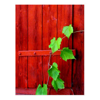Green Vine On Red Barn Postcard
