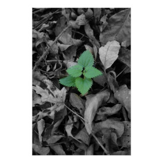 Green weed black and white poster