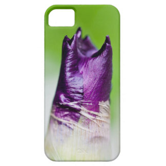 green welcomes purple iPhone 5 covers