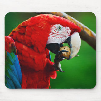 Green-winged Macaw or Red-and-green Macaw Mouse Pad
