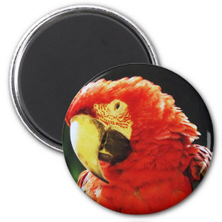 Green Winged Macaw Parrot Bird Close-Up 6 Cm Round Magnet