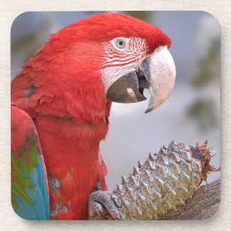Green-winged macaw with pine cone coasters