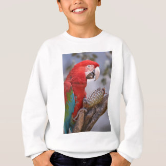Green-winged macaw with pine cone sweatshirt
