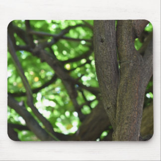 Green Wisteria Pergola Tree Nature Photography Mouse Pad