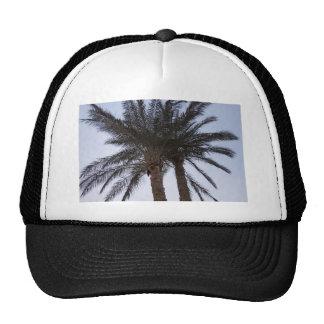Greenery of palm trees trucker hat