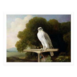 Greenland Falcon (Grey Falcon), 1780 (oil on panel Postcard