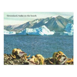 Greenland, tusks on the beach postcard