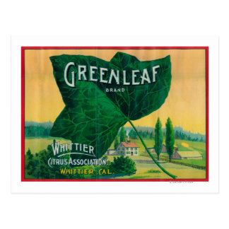 Greenleaf Lemon LabelWhittier, CA Postcard