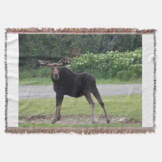 Greenville Moose 1