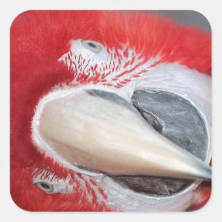Greenwing macaw square sticker