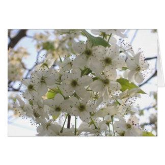 Greeting Card - All Occasion - Bloom Bradford Pear