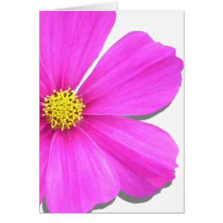 Greeting Card - All Occasion - Dark Pink Cosmos