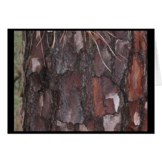 Greeting Card, blank Inside, Bastrop Pine Forest Card