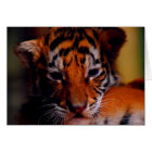 Greeting Card Blank Tiger Cub