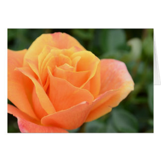 Greeting card, blank, with Orange Rose Card