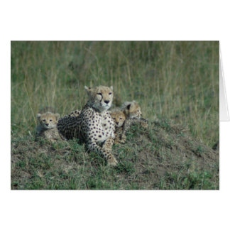 Greeting Card Cheetah Mom and her three cubs
