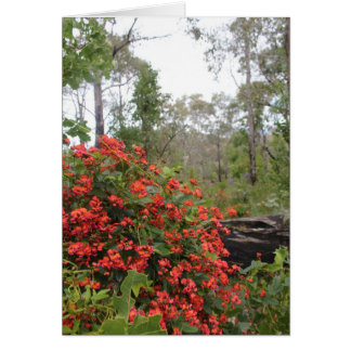 GREETING CARD - Coral creeper