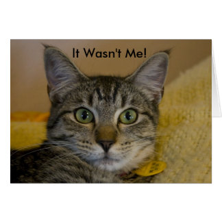Greeting Card:  It Wasn't Me Cat Card
