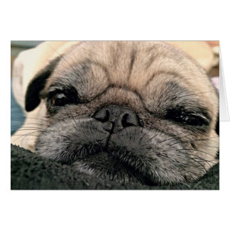 Greeting Card: Itsy Pug/Miss your face Card