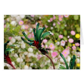 GREETING CARD - Kangaroo Paw