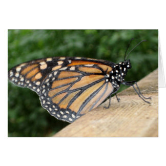 Greeting Card - Monarch Butterfly