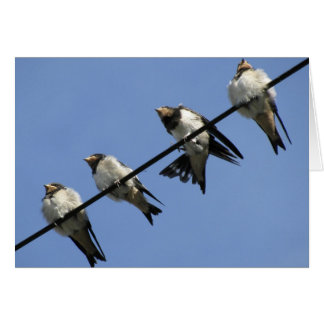 Greeting card : swallow chicks on a cable