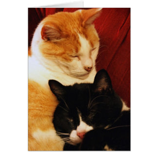 Greeting Card: Sweet Dream Cats Card