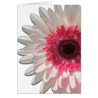 Greeting Card - Watermelon Lollipop Daisy