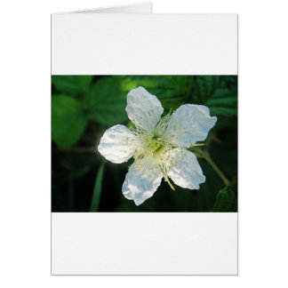 Greeting card wild backberry blossom