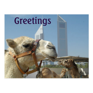 Greeting Card with Camels in Dubai Postcard