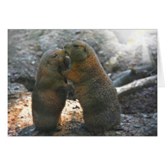 Greeting card with cute marmot couple