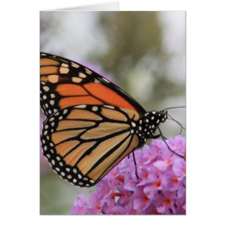 Greeting card with Monarch Butterfly
