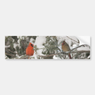 Greeting Cards Bumper Sticker