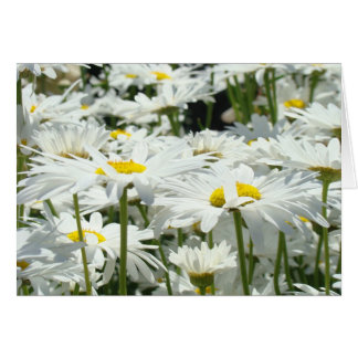 Greeting Cards custom White Daisy Flowers Floral