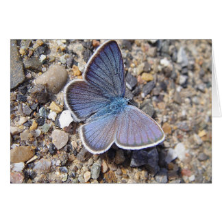 Greeting map blue butterfly: Bläuling, in blank Card