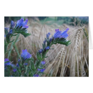 Greeting map cornflowers card