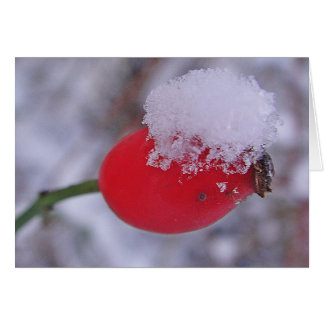 Greeting map large rosehips with snow, in blank card