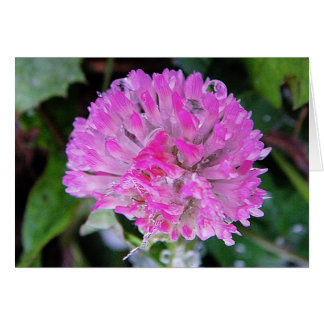 Greeting map pink Kleeblüte with ice crystals Greeting Card