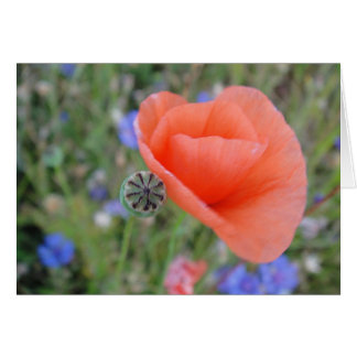 Greeting map poppy flower heart, shapable in blank greeting card