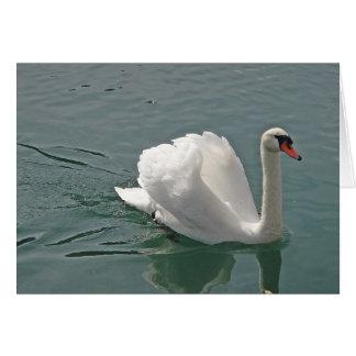 Greeting map proud white swan greeting card