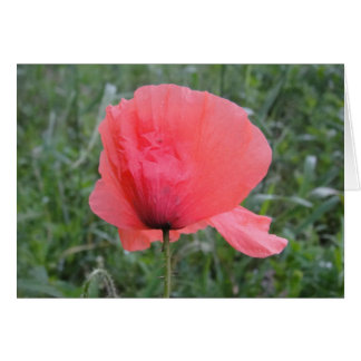 Greeting map red poppy flower: have A happy day Card