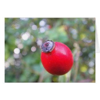 Greeting map rosehips, in blank card