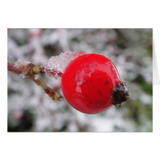 Greeting map rosehips with ice crystals, in blank card