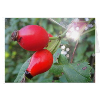 Greeting map rosehips with sunbeam, in blank card