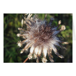 Greeting map star shaped straw flower, in blank greeting card