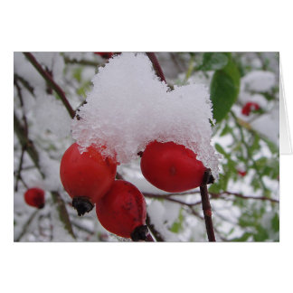 Greeting map three rosehips with snow, in blank card