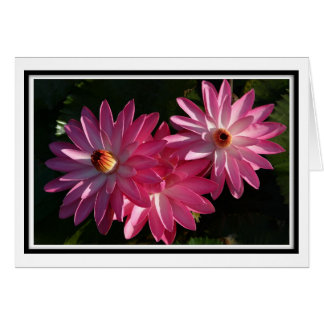 GreetingCard-Pink water lilies Greeting Card