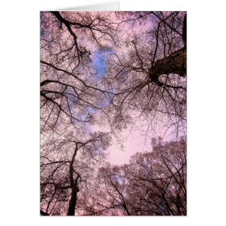 Greetings card - Promotion - Canopy d' Arbres