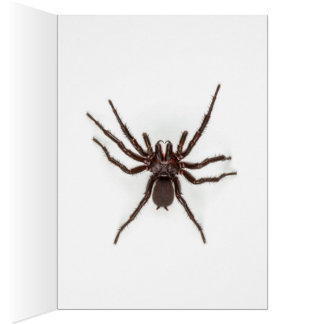Greetings From Australia - Funnel-Web Spider Greeting Card
